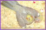 Annika & 3 chicks :: May 13, 2003