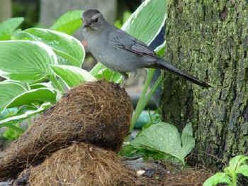 Thomas bouchard nature vs nurture essay