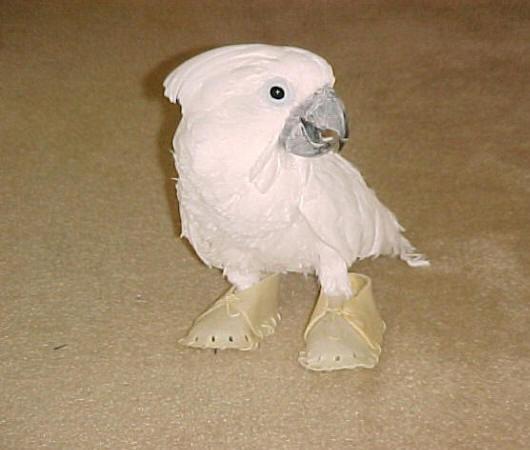 My pet bird essay